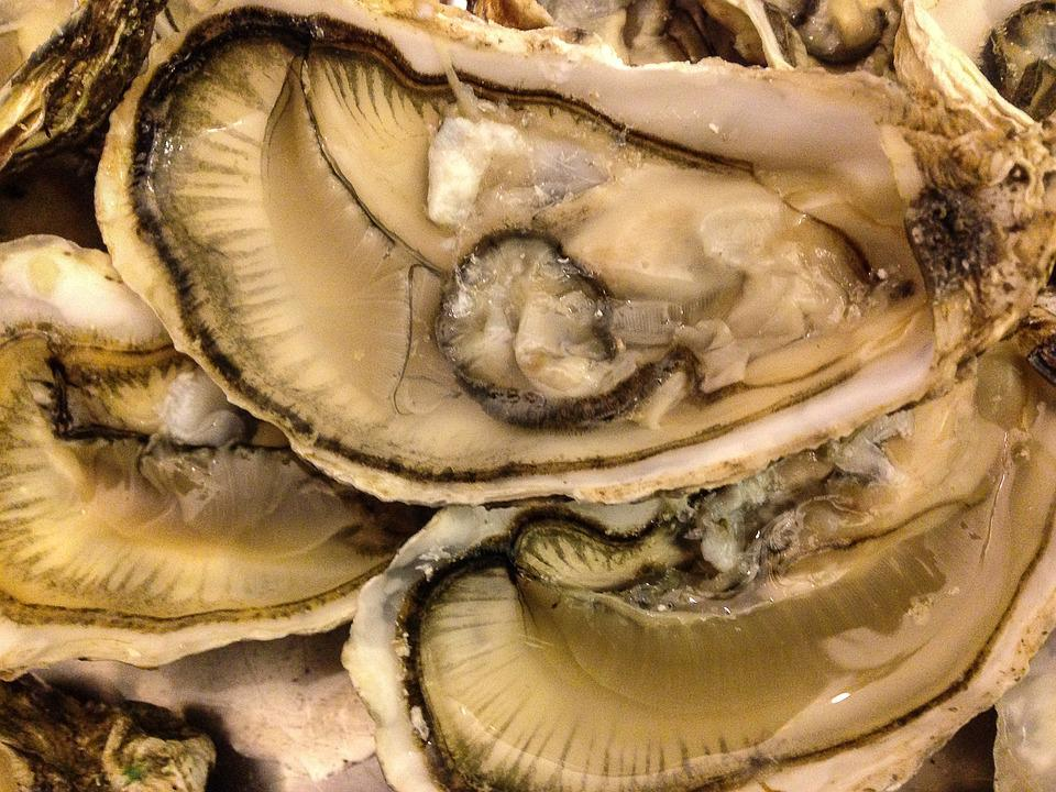 Shells, Seafood, Oysters, Crustaceans