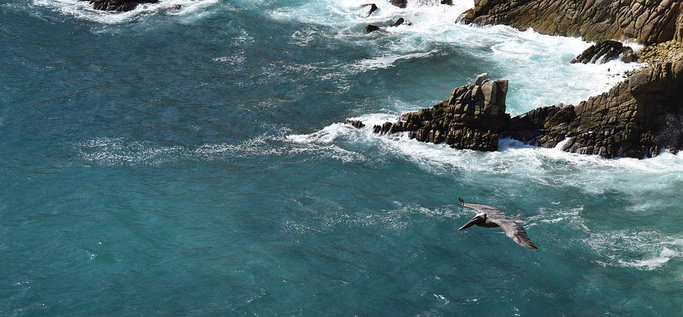 Bird, Cliffs, Flying, Pacific, Ocean, Acapulco