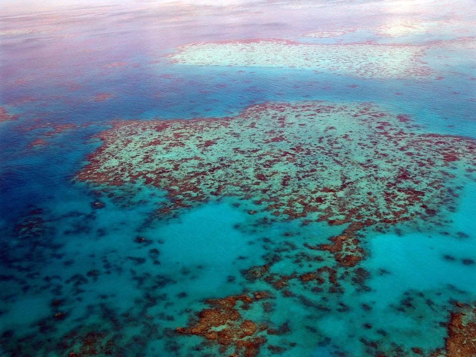 Great Barrier Reef, Diving, Coral, Ocean, Pacific