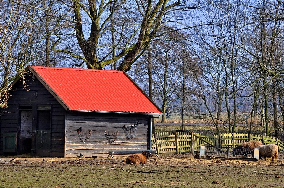 Barn, Shed, Paddock, Sheep, Livestock, Fence, Hay-rack