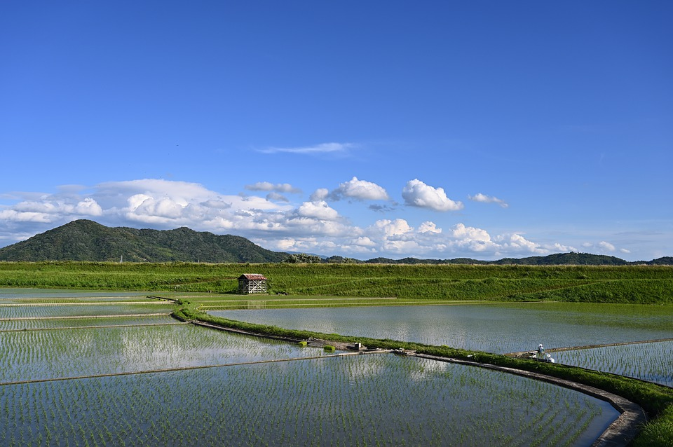 Japan, Yamada's Rice Fields, Paddy Field, Blue Sky