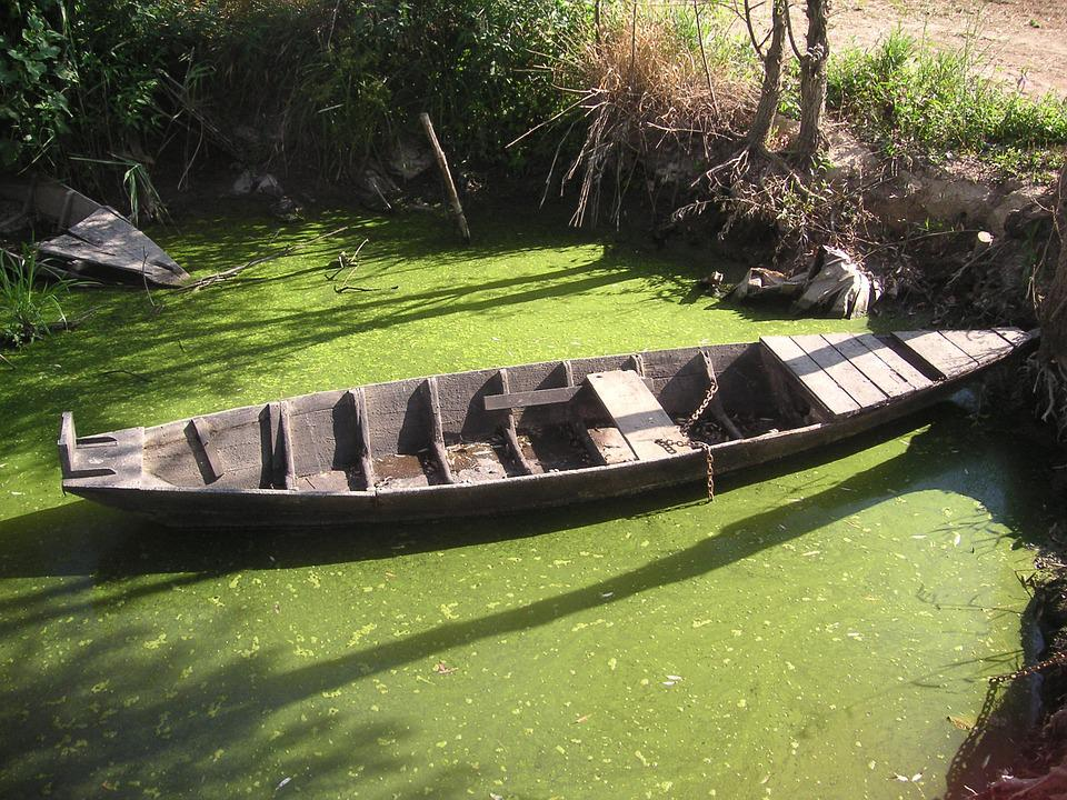 Padule, Fucecchio, Wherry, Boat, Swamp, Green, Nature
