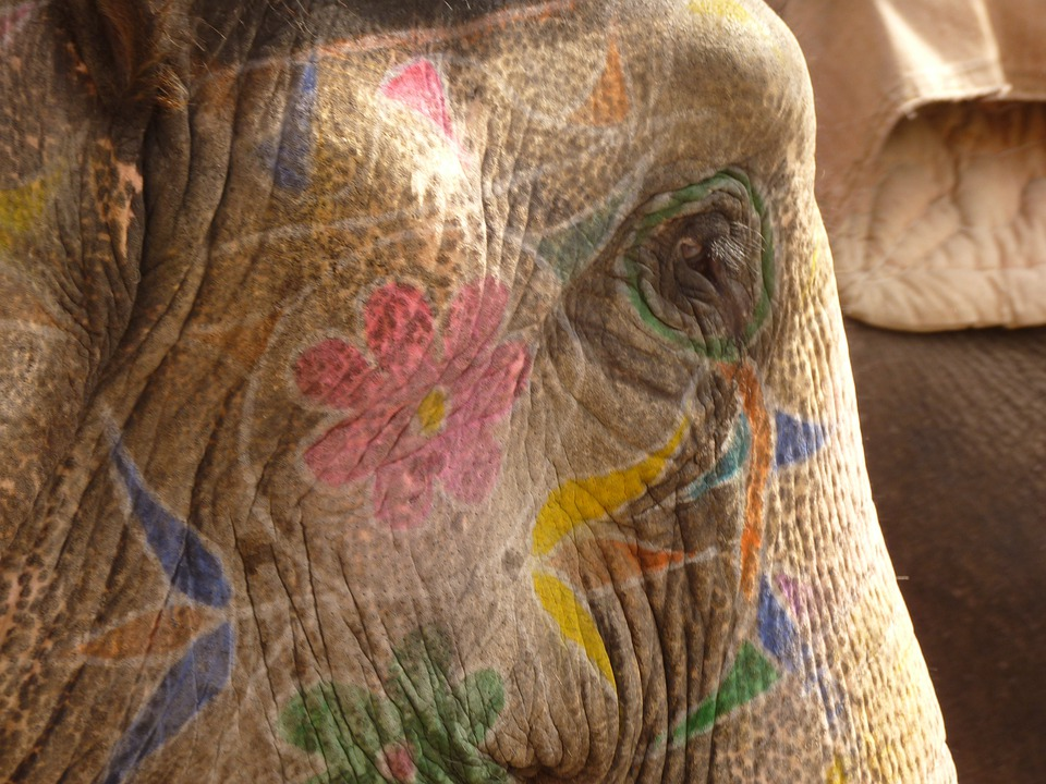 Elephant, Painted, Head, India