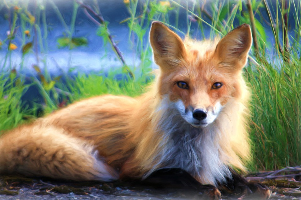 Painting, Oil Painting, Photo Painting, Fuchs, Red Fox