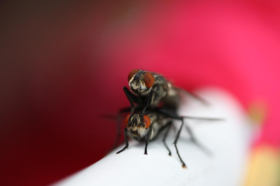 Fly, Lovers, Pair