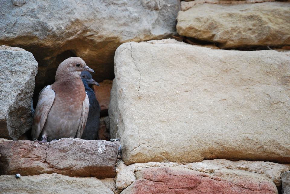 Pigeons, Pair, Birds, Nature, Whisper Sweet Nothings