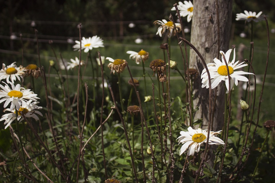 Nature, Landscape, Paisaje, Natural, Outdoor