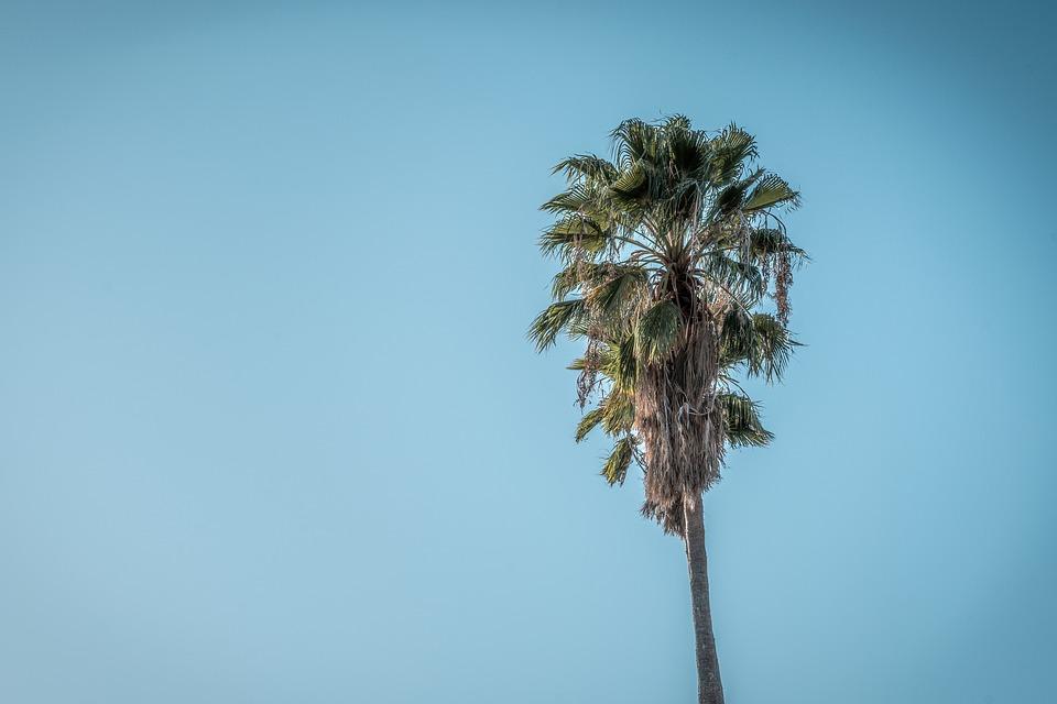 Sky, Palm, Tree, Beach, Ocean, Blue, Clouds, Tropical