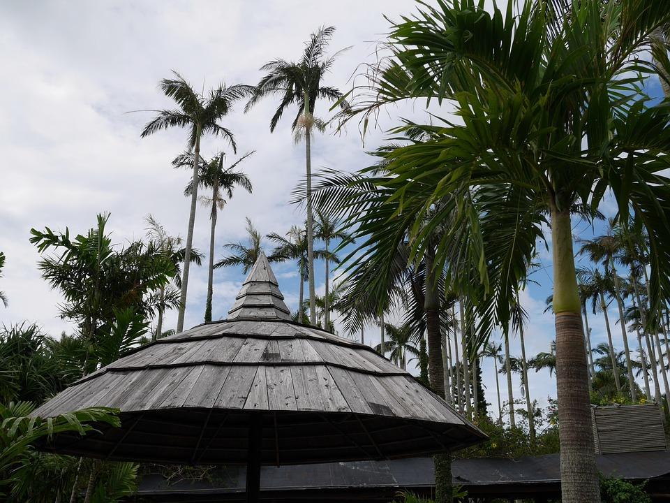Botanical Garden, Palm, Arbor, Comfort, Break