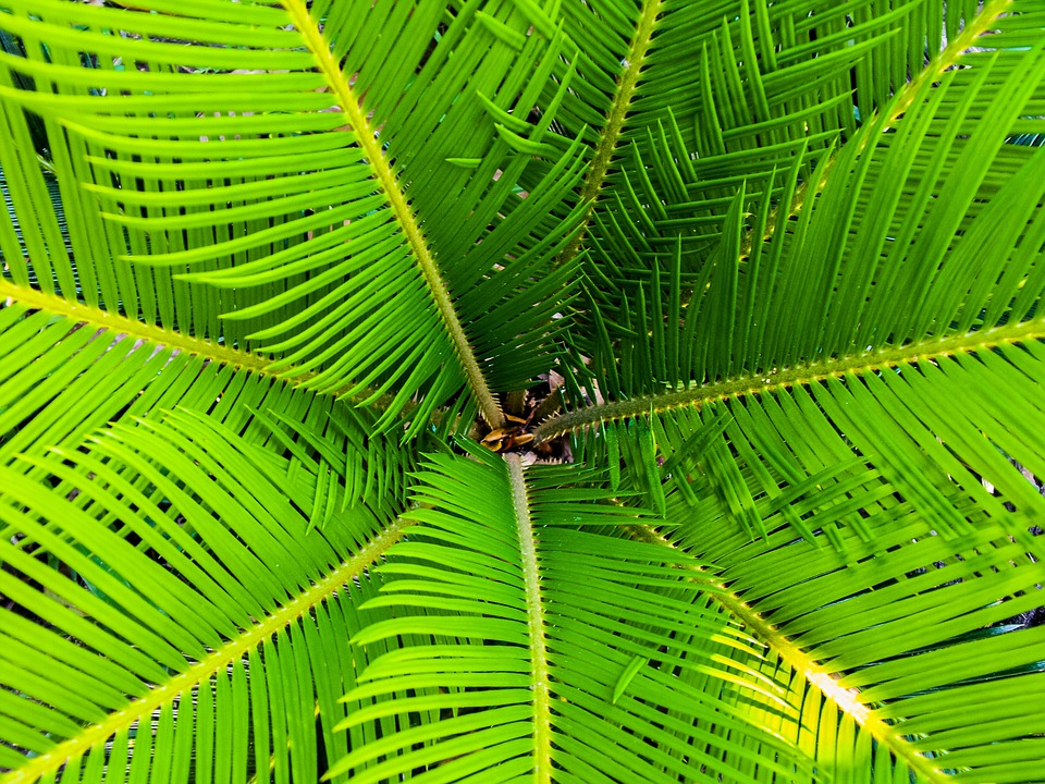Palm, James, Palm Tree, Close