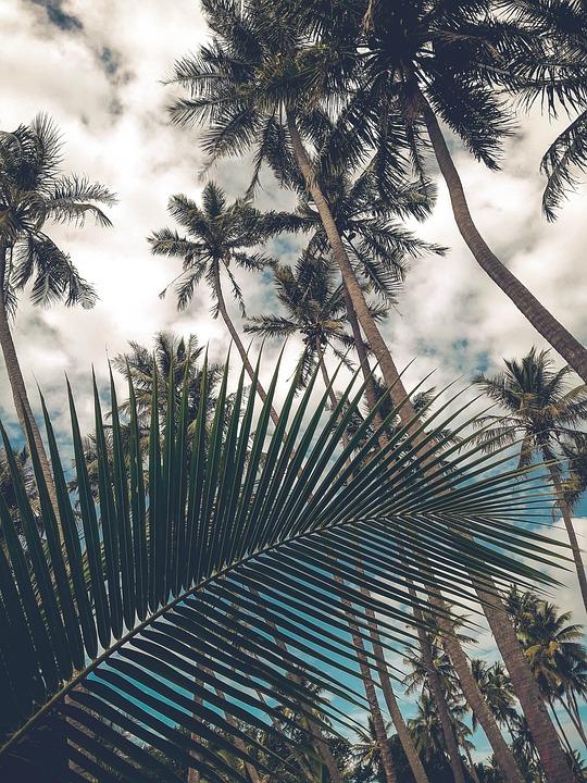 Coconut Trees, Fin, Sky, Coconut, Tree, Palm, Tropical
