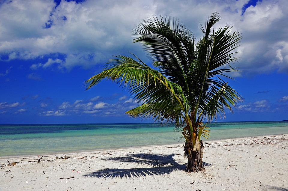 Cuba, Palm, Beach, Sea, Island, Sky