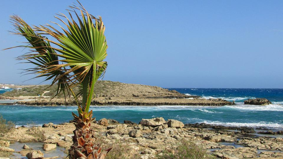 Cyprus, Ayia Napa, Nissi Beach, Palm, Tree, Coastline