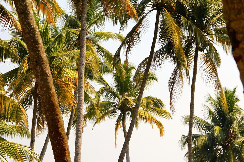 Palm, Summer, Holiday, Tree, Exotic, Palm Tree
