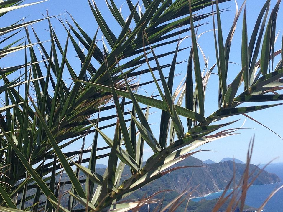 Holiday, Palm Fronds, Palm, Palm Tree, Summer, Fan Palm