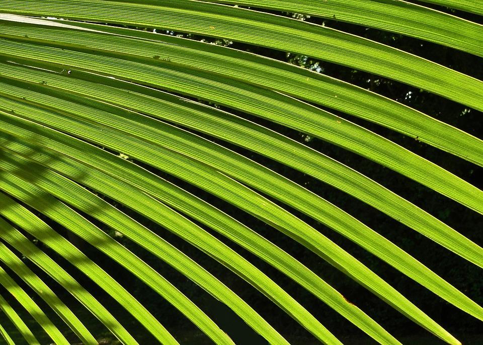 Palm, Leaf, Green, Tree, Foliage, South, Summer, Nature