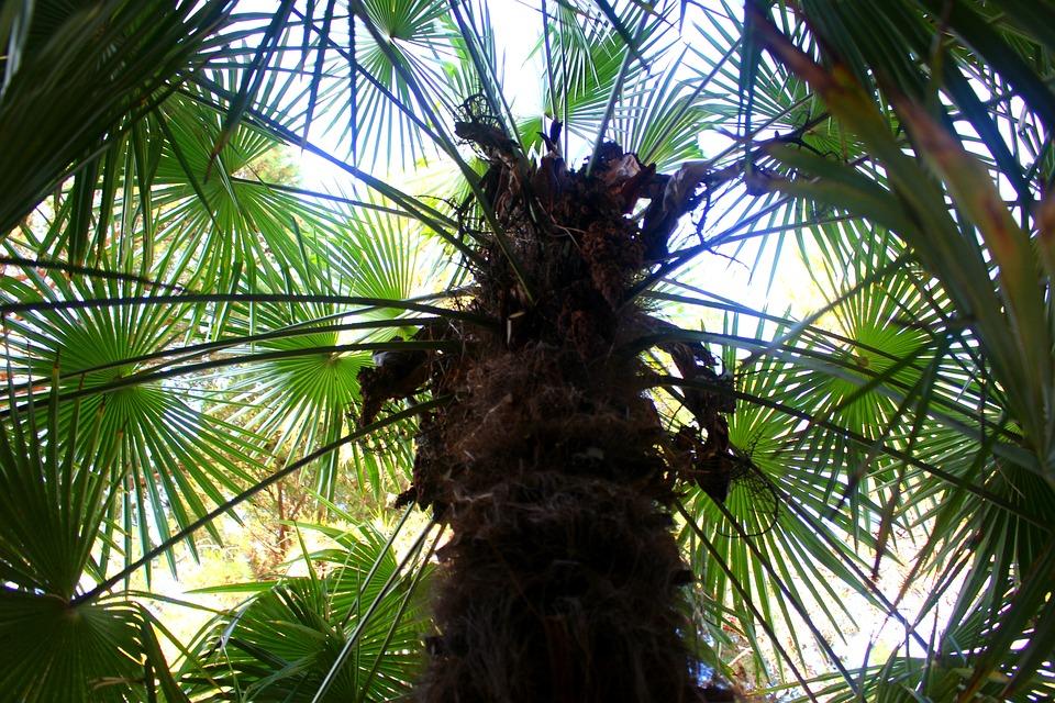 Palm Trees, Plant, Palm Leaf, Green, Tree, Palm Tree