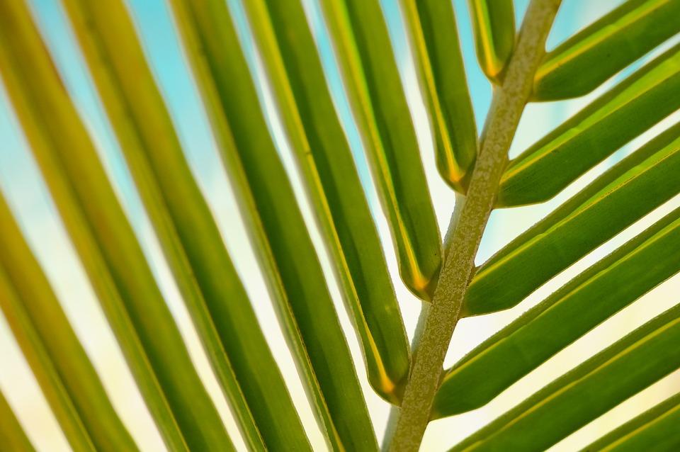 Plant, Leaf, Macro, Palm, Summer, Leaves, Tropical