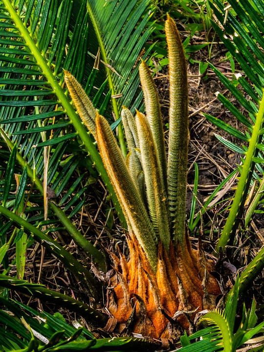 Palm, Palm Tree, New Drives