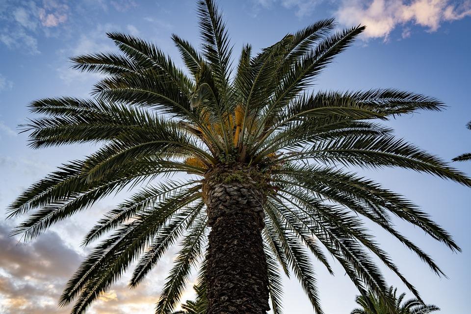 Tree, Palm, Tropical, Beach, Summer, Outdoors, Nature