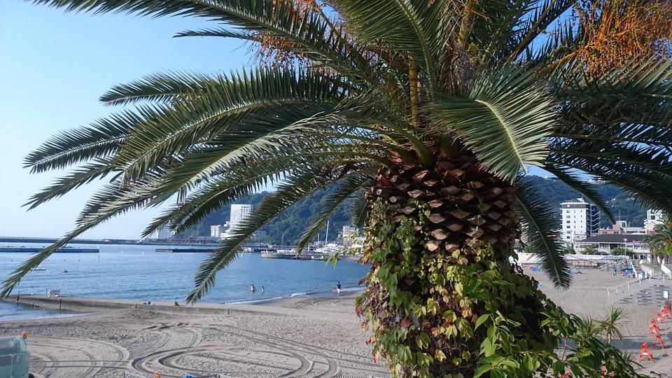 Palm, Summer Vacation, Sea, Beach, Coast, Summer