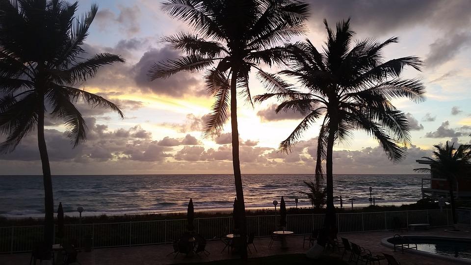 Beach, Palm, Seashore, Ocean, Tropical