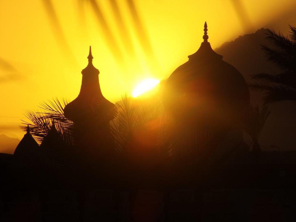 Sun, Palm, Sunset