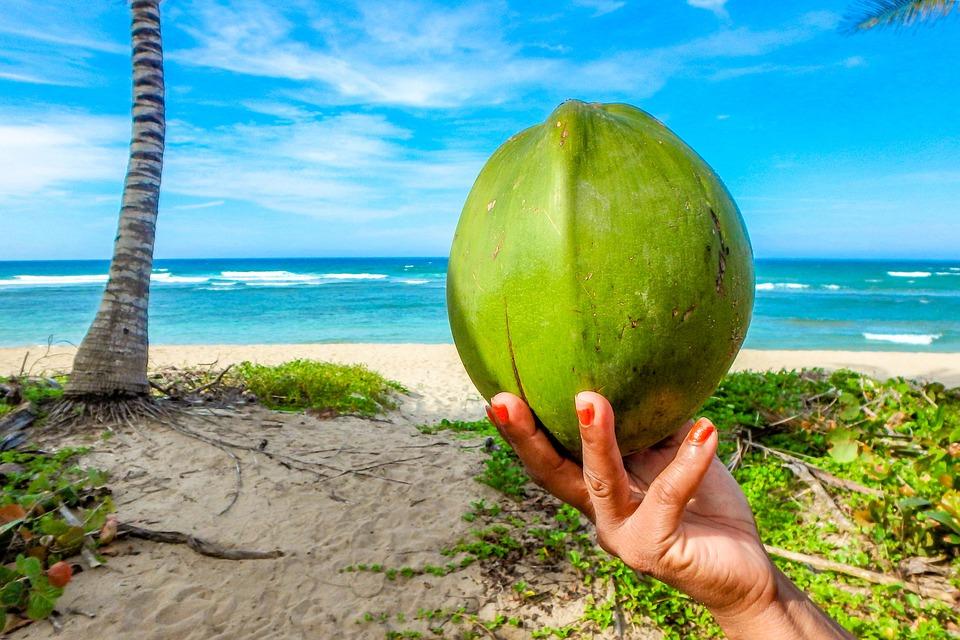Coconut, Beach, Summer, Sea, Seychelles, Palm, Swim