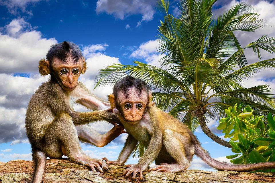Nature, Animals, Ape, Palm, Tree, Log, Fear, Risk