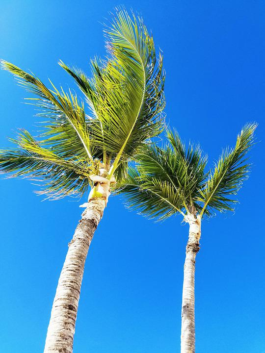 Palm Tree, Caribbean Sky, Tropical, Beach