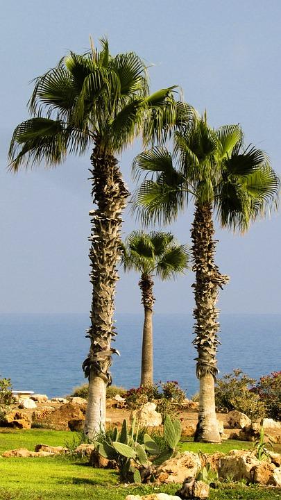 Palm Tree, Garden, Nature, Summer, Cyprus