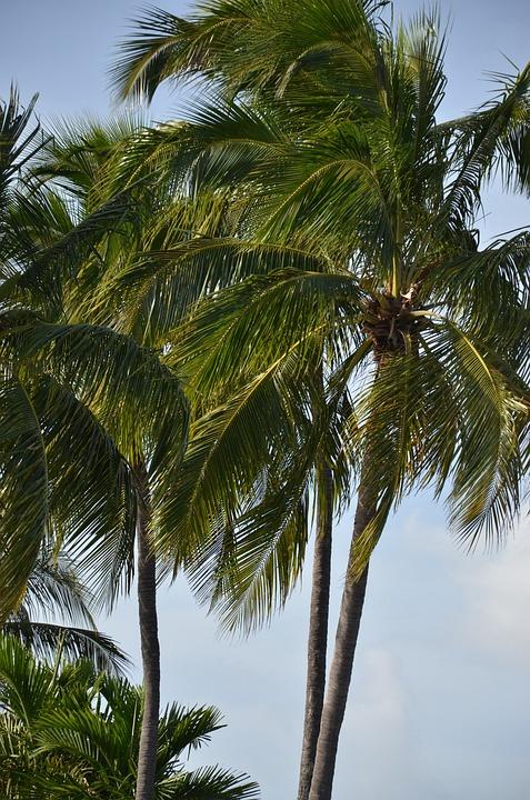 Florida, Palm, Palm Tree, Tropical, Trees, Landscape