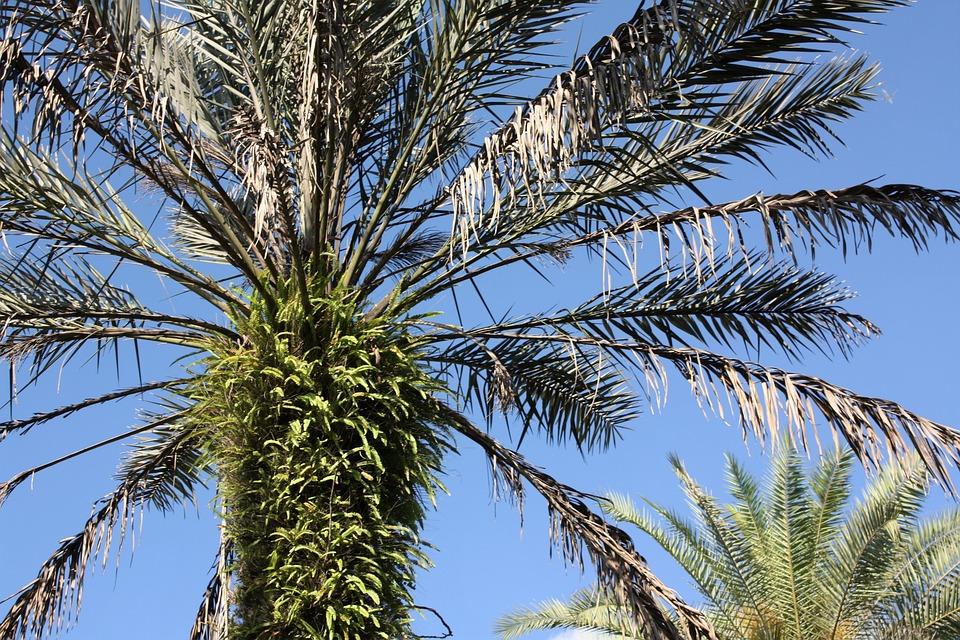 Palm Tree, Tropical, Palm, Tree, Summer, Nature, Beach