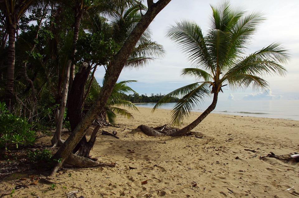 Palm Tree, Tree, Palm, Tropical, Plant, Water, Beach