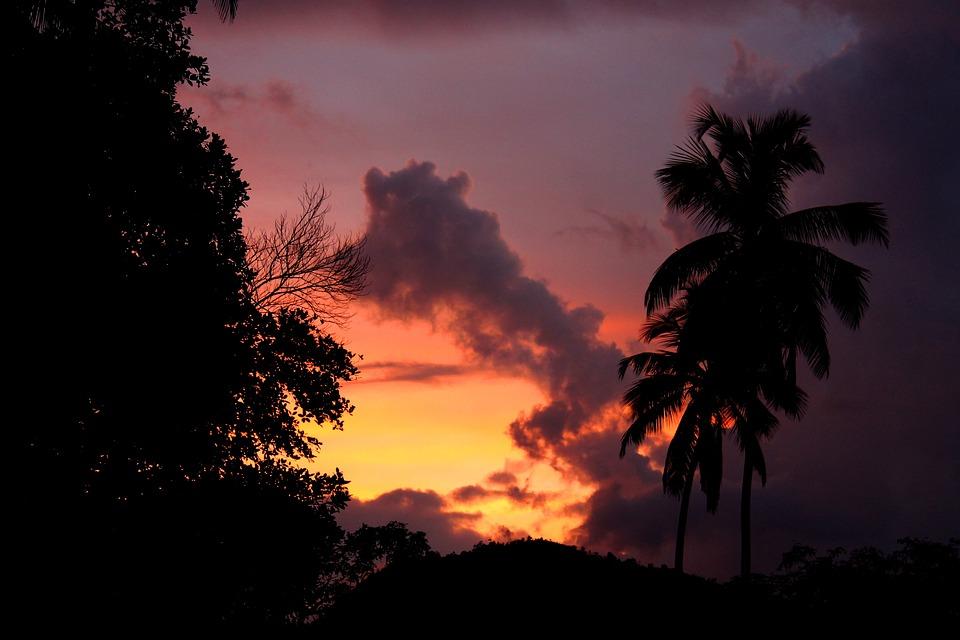 Palm Tree, Silhouette, Sunset, Dusk, Dawn, Twilight