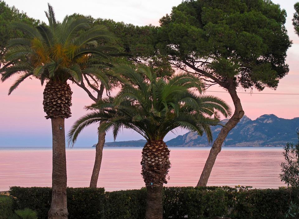 Mallorca, Booked, Palm Trees, Abendstimmung, Pollença