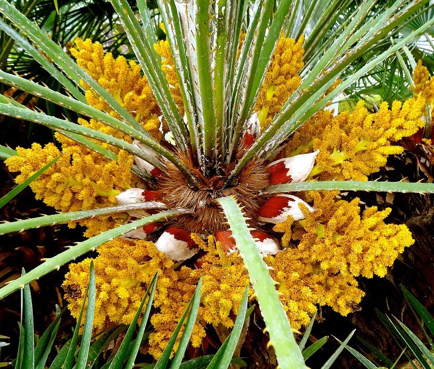 Free photo palm trees flower beach palm max pixel flower palm palm trees beach mightylinksfo