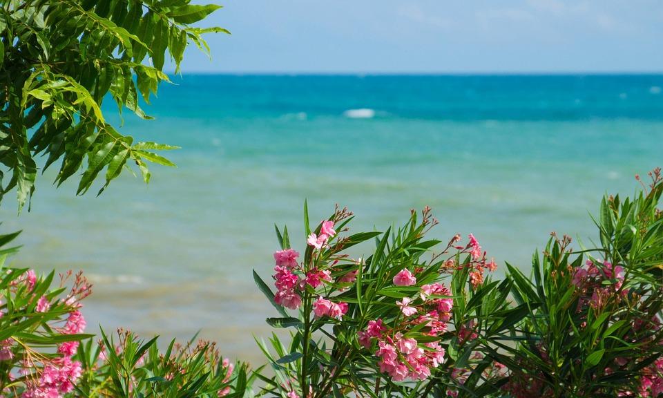 Sea, Flowers, Landscape, Palm Trees, Nature, Summer