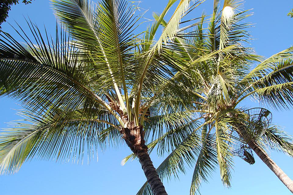 Palm Trees, Summer, Australia, Frond