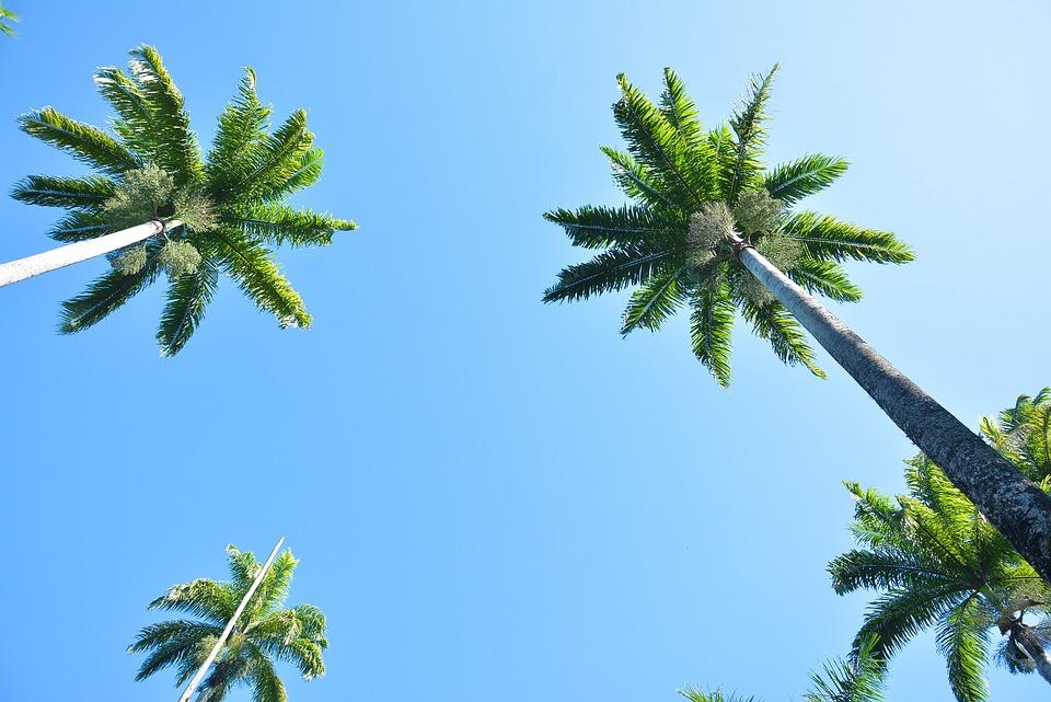 Palm Trees, Garden, Summer