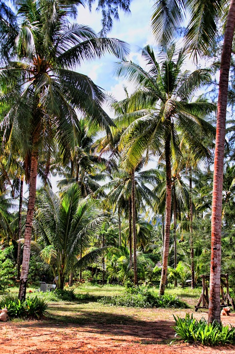 Thailand, Palm Trees, Holiday, Landscape, Asia, Nature