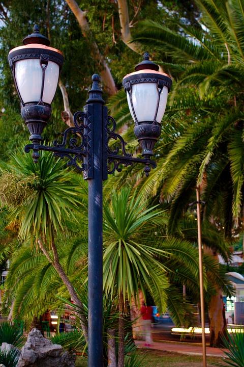 Lantern, Palm Trees, Landscape