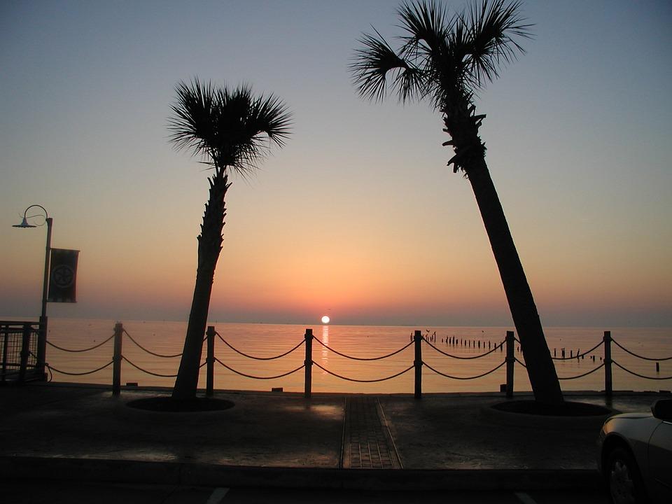 Sunrise, Palm Trees, Morning