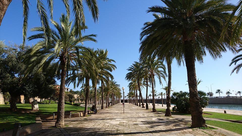 Palma De Mallorca, Passeig Dalt Murada, Palm Trees