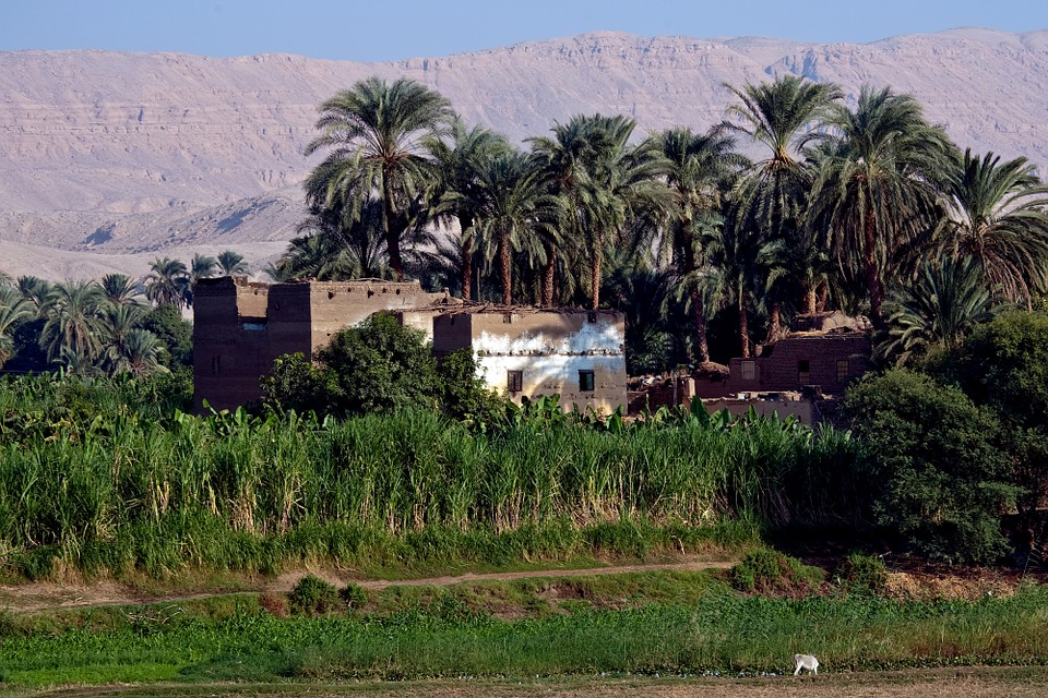 House, Egypt, Palm Trees, Crops, Sand, Dunes