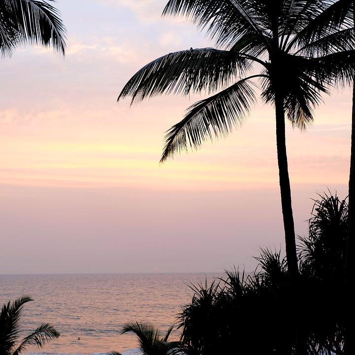 Palma, Palm Trees, Summer, Sky, Sea, Beach, Water