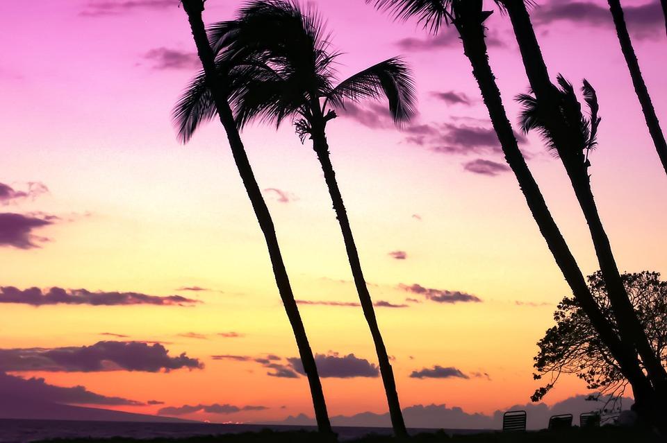 Sunset, Beach, Hawaii, Palm, Trees, Palm Trees