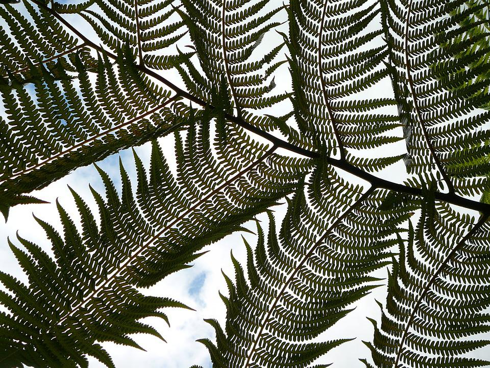 Nature, Palm Frond, Fern, Palm, Tropical, Natural