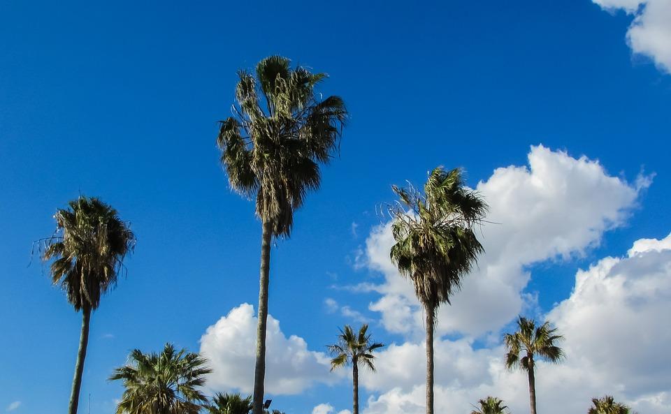 Cyprus, Ayia Napa, Makronissos Beach, Palms, Sky, Blue