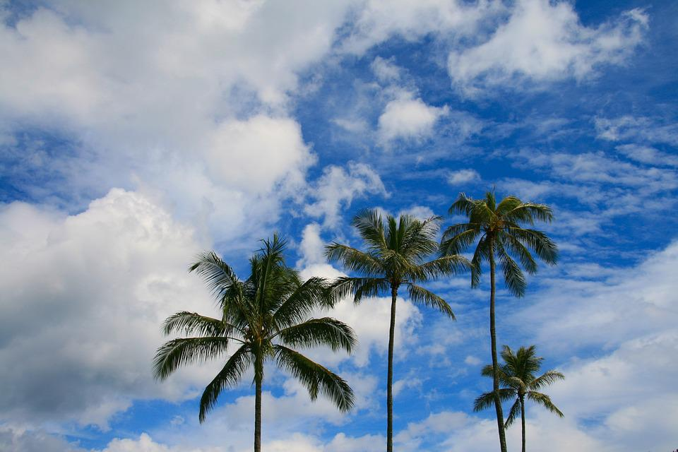 Palms, Palm Tree, Sky, Blue, Tree, Exotic, Tropical